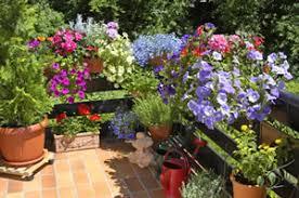 topfpflanzen balkon blumenkasten ganzjährig bepflanzen beispiele für pflanzen
