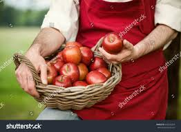 farmer his apple orchard stock photo 643235203 shutterstock
