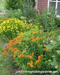 the 25 best butterfly weed ideas on pinterest orange flowering