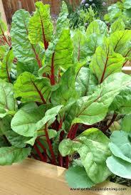 196 best love the veggie images on pinterest vegetables exotic