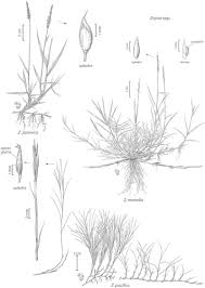 crop science article digital library