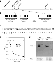 the flavonoid biosynthetic enzyme chalcone isomerase modulates