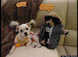 top cutest dog costumes for small dogs wallpaper with cute puppy