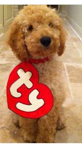 Infant Dog Halloween Costume 55 Halloween Office Dogs Images