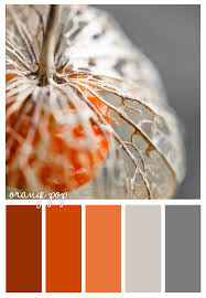 best 25 persimmon color ideas on pinterest what are colours