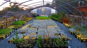 california native plants nursery check out the asilomar conference grounds in california places