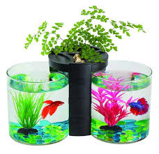 nano u0026 small tanks aquatic supplies australia