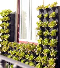 mini vertical garden for balcony patio or kitchen urban gardens
