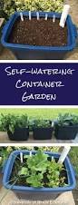 best 25 self watering containers ideas on pinterest self