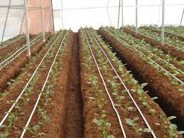 the basics on how to install a drip irrigation system on your own