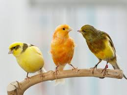 Your Facebook Friends Could Learn A Lot From Bill - what we can learn from a new bird tree of life science smithsonian