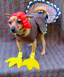 puppy thanksgiving how to spoil your dog this thanksgiving rover blog
