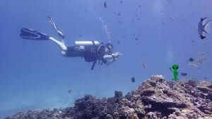 fun diving with local dive thailand local dive thailand