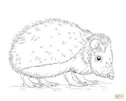 european hedgehog coloring page free printable coloring pages