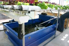 all you need to know to build a simple backyard aquaponics system