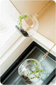 cool terrariums archives gardenoholic