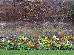 amazing flowers on the wall with house with beautiful flowers on
