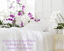 Easy Care Indoor Plants 8 Easy Care Indoor Plants To Brighten Up Your Home This Winter