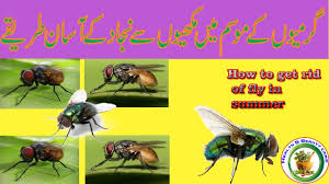 Getting Rid Of Flies In Backyard How To Get Rid Of Fly In Summer How To Kill Flies In The House
