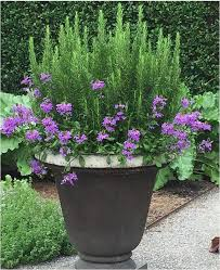 best planters container gardens pinterest unique 5574 best planters garden pots