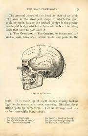 best 25 skull anatomy ideas on pinterest mouth drawing human