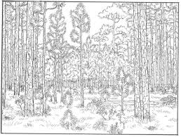 forest coloring pages forest coloring pages to download and print