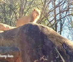 a great afternoon at zoo atlanta savvy nana