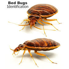 Powder That Kills Bed Bugs Residex P Insect Killing Powder 100g Earwigs Hsd Online