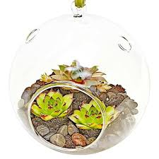glass terrariums terrarium shop living arts luludi