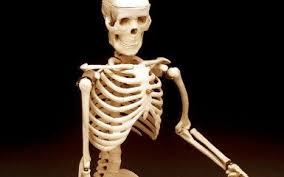 Halloween Decorations Skeleton Bones by Halloween Decorations Extreme Real Bones 104 3 K Hits Chicago