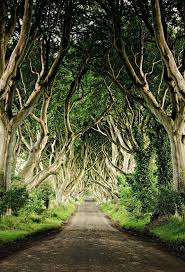 258 best wallpaper images on pinterest wallpaper jungles and the dark hedges wall mural photo wallpaper photowall