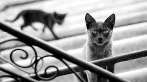 Cute Black And White Wallpapers by 50 Free Hd Cat Wallpapers