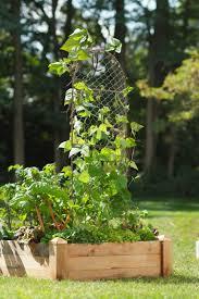 chicken wire plant trellis buy from gardener u0027s supply