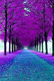 Colors Of Purple Best 25 Purple Teal Ideas On Pinterest Deep Purple Color