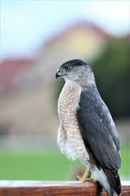 birds of stanford