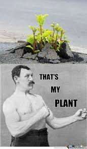 Meme Overly Manly Man - 44 best overly manly man images on pinterest overly manly man meme