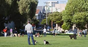 How To Get A Comfort Dog 15 Things Humans Do Wrong At Dog Parks Mnn Mother Nature Network
