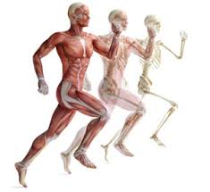 Essentials Of Human Anatomy And Physiology Book Online What Do I Really Need To Know From Ace U0027s Essentials Of Exercise