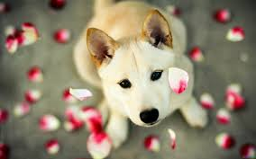 dog wallpapers dog wallpapers for laptops download