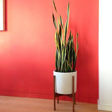 Indoor Plants That Don T Need Sun 25 Best Mother In Law Tongue Ideas On Pinterest Mother In Law