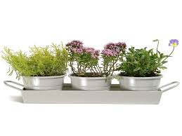 Window Sill Garden Inspiration Indoor Herb Pots Window Box Inspirational Kitchen Herb Pots Wooden