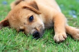 How Do You Get Bed Sores Pressure Sores On Dogs Causes U0026 Symptoms Canna Pet