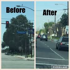 discount tree services tree services 136 n grand west covina