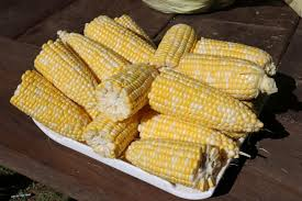 how to dry corn to feed wildlife how tos diy