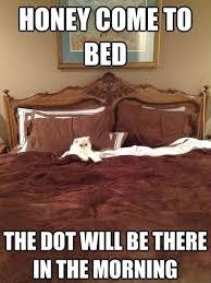 Bed Meme - honey come to bed cat meme cat planet cat planet