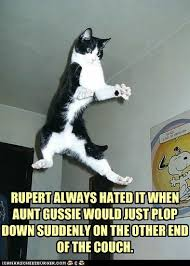Flying Cat Meme - rupert always hated i can has cheezburger funny cats cat meme