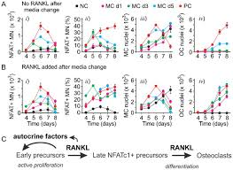 autocrine signaling is a key regulatory element during