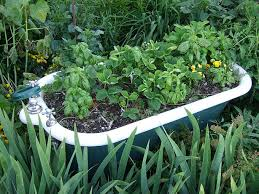 start a small vegetable garden