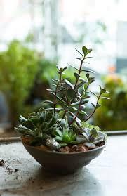 best 25 garden city bowl ideas on pinterest desert landscaping