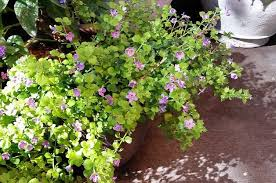 best plants for container shade gardening small space gardening